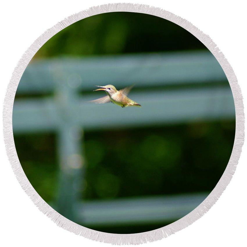 Hummingbird Round Beach Towel featuring the photograph Hummer In Flight by Ben Upham III
