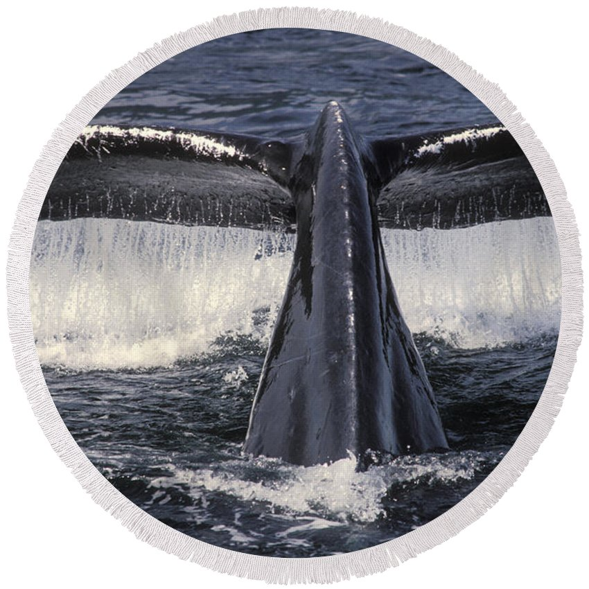 Animal Round Beach Towel featuring the photograph Humpback Whale Fluke by Ron Sanford