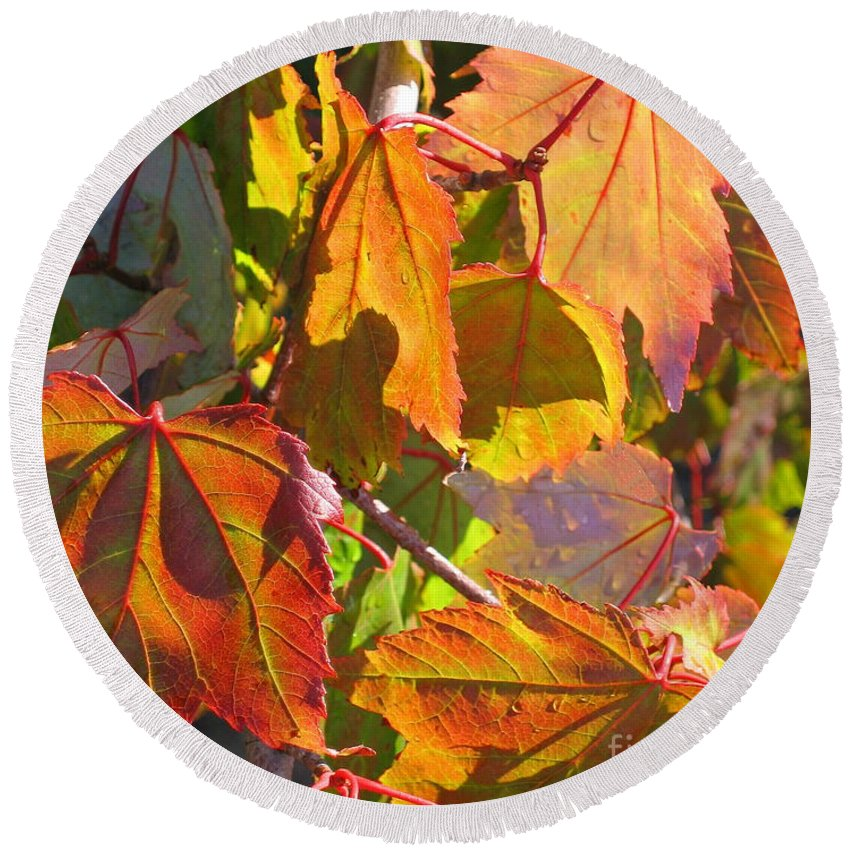Autumn Round Beach Towel featuring the photograph Illumining Autumn by Ann Horn