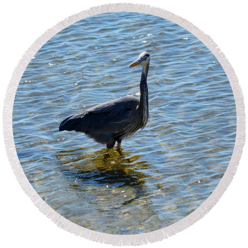 Blue Heron Round Beach Towel featuring the photograph In The Water by Linda Kerkau