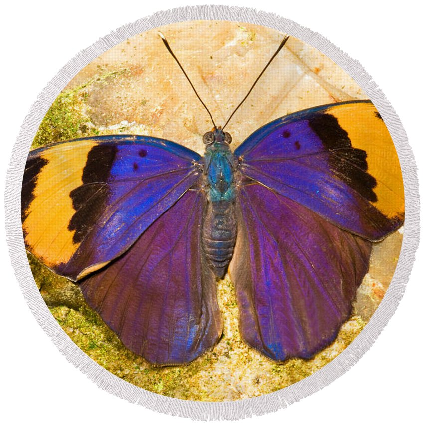 Animal Round Beach Towel featuring the photograph Indian Leaf Butterfly by Millard H. Sharp