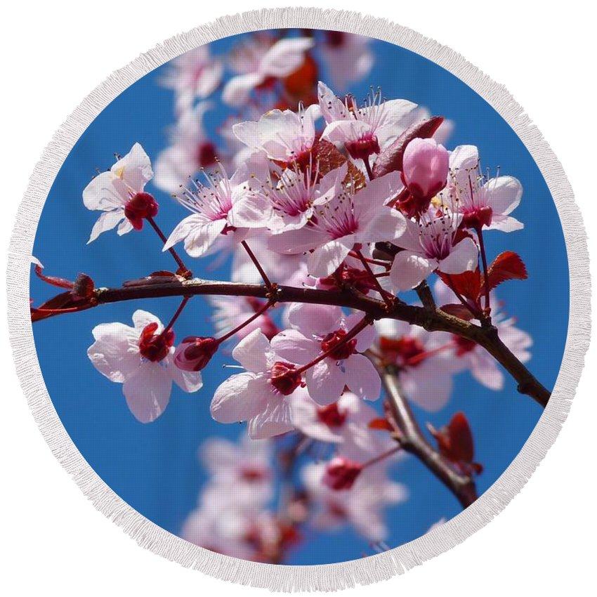 Japanese Cherry Tree Round Beach Towel featuring the photograph Japanese Cherry Tree by Gallery Of Modern Art