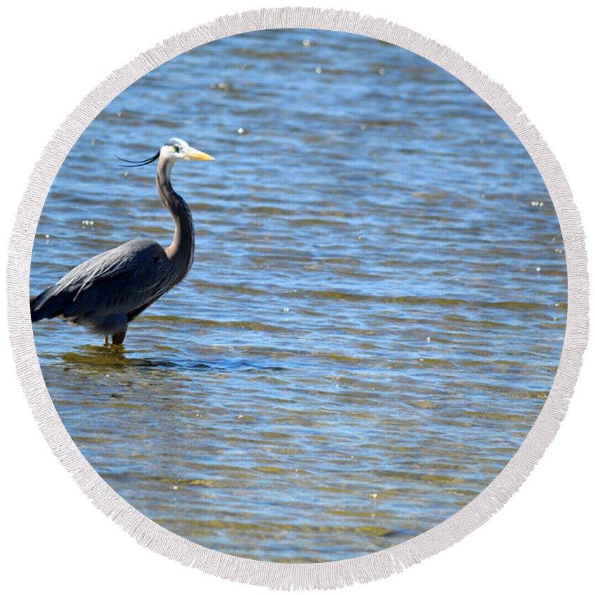 Blue Heron Round Beach Towel featuring the photograph Knee Deep by Linda Kerkau