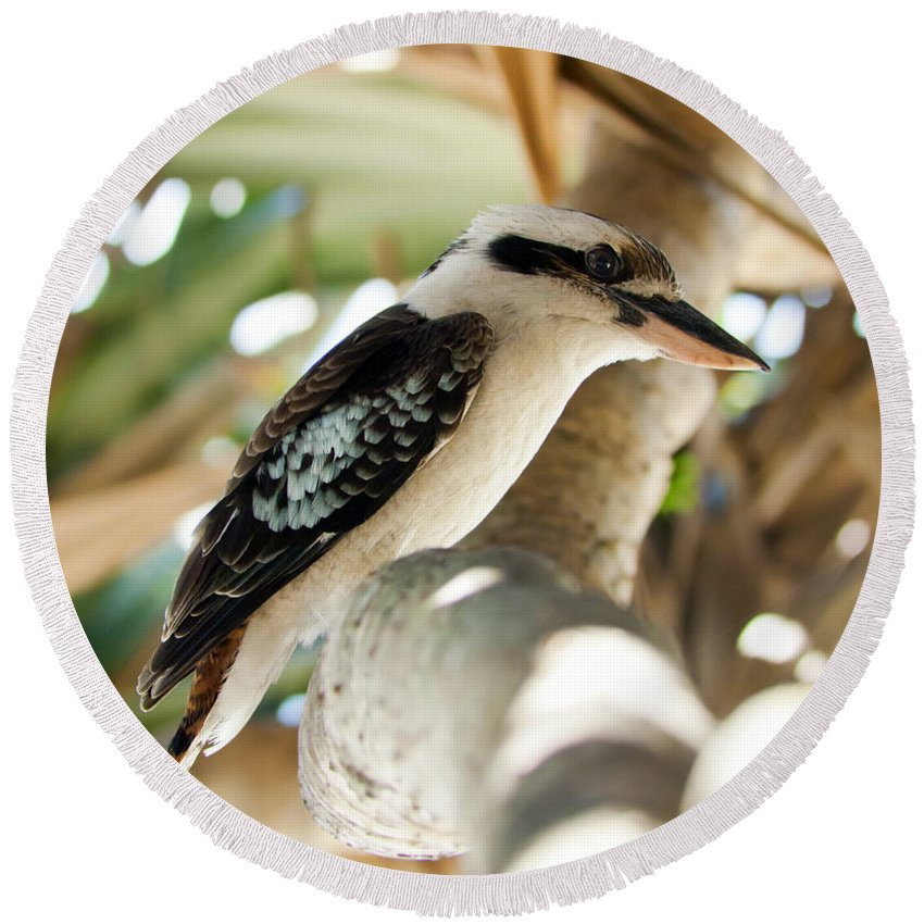 Animal Round Beach Towel featuring the photograph Kookaburra by Tim Hester