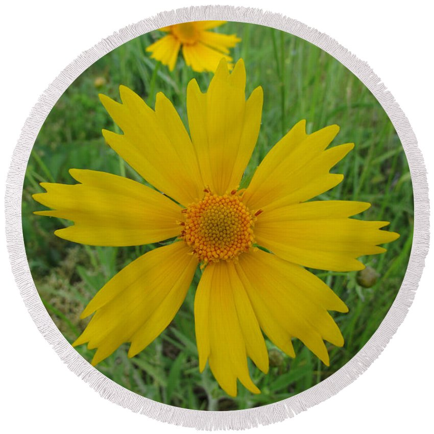Flowers Round Beach Towel featuring the photograph Lanceleaf Coreopsis by Jamie Smith
