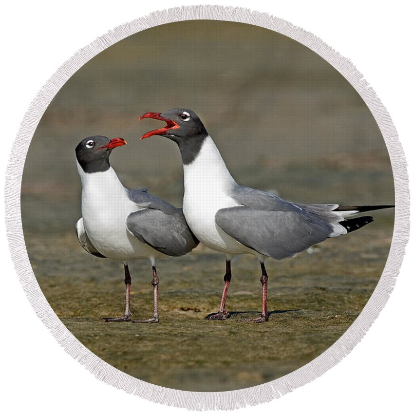 Laughing Gull Round Beach Towel featuring the photograph Laughing Gull by Anthony Mercieca