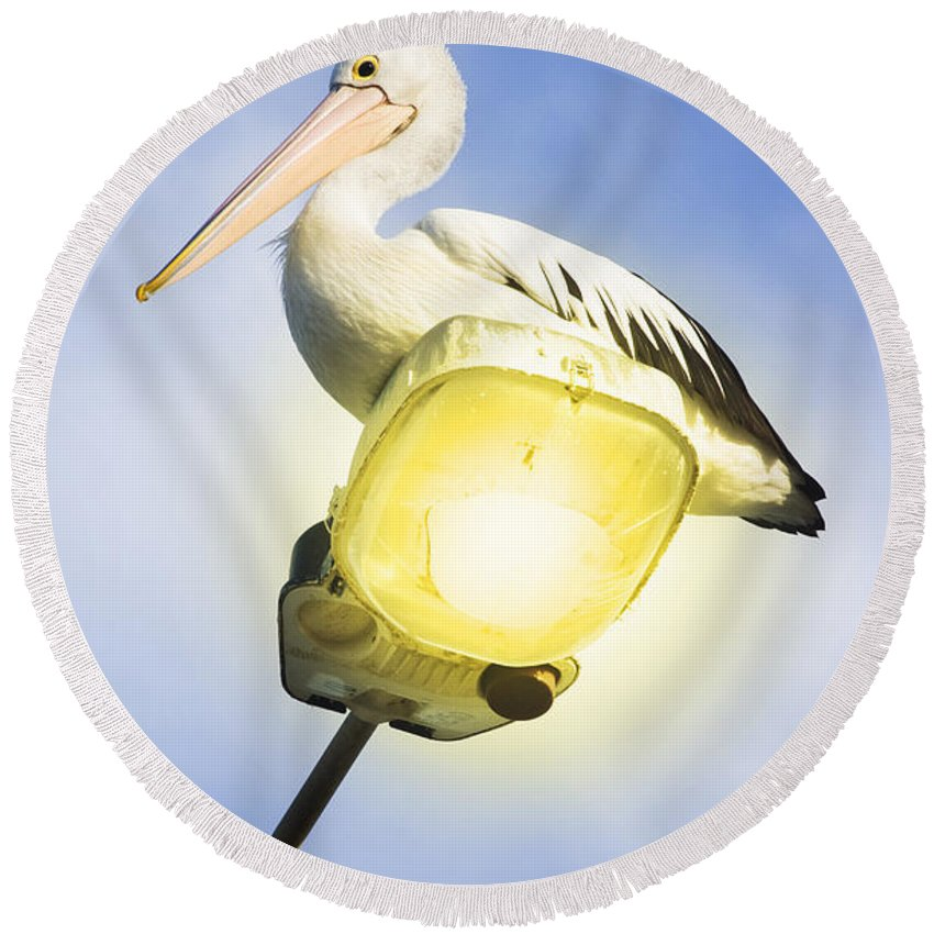 Pelican Round Beach Towel featuring the photograph Light Pelican by Jorgo Photography - Wall Art Gallery