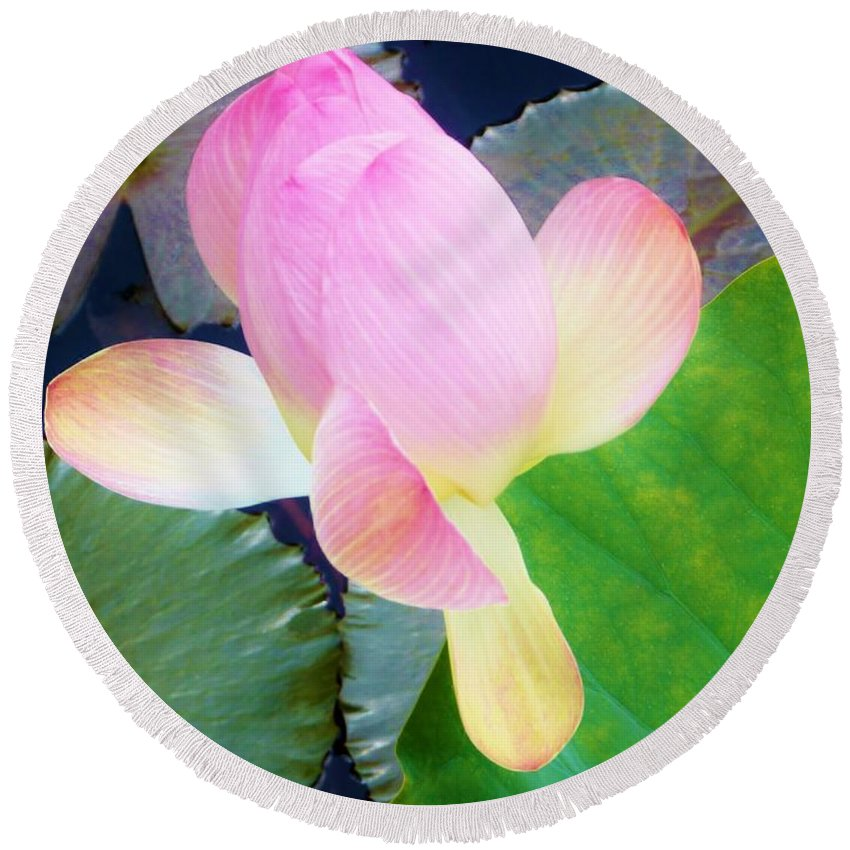 Color Round Beach Towel featuring the photograph Lotus Lilly by Amar Sheow