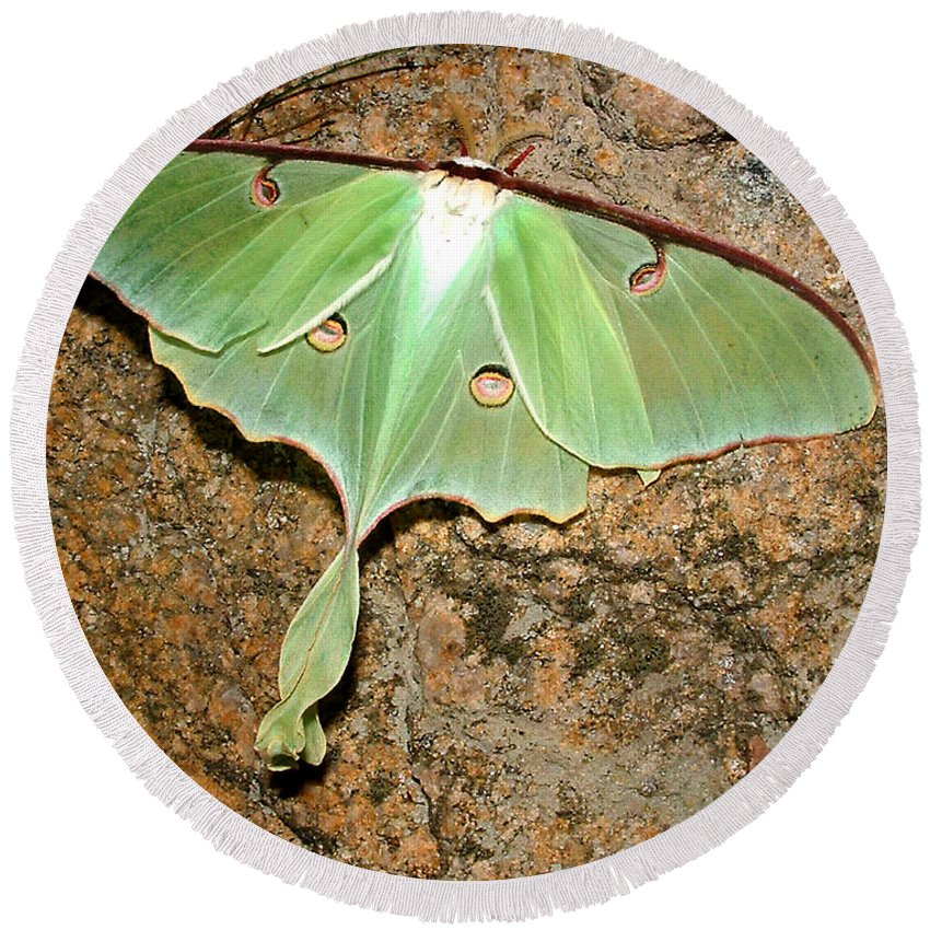 Luna Round Beach Towel featuring the photograph Luna Moth by Tanya Hamell