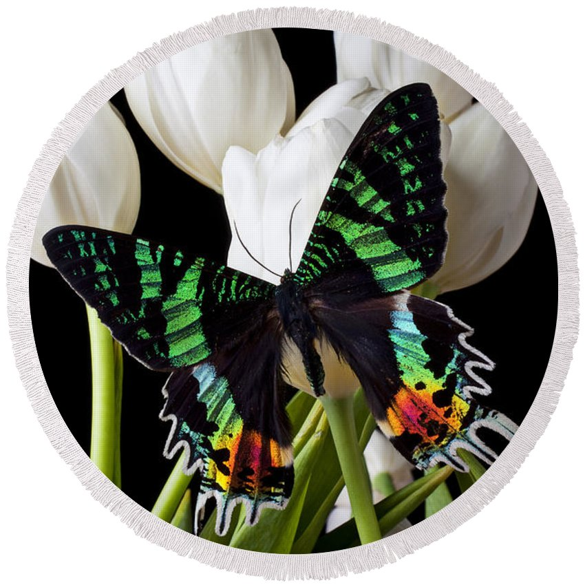 Madagascar Butterfly Round Beach Towel featuring the photograph Madagascar Butterfly by Garry Gay