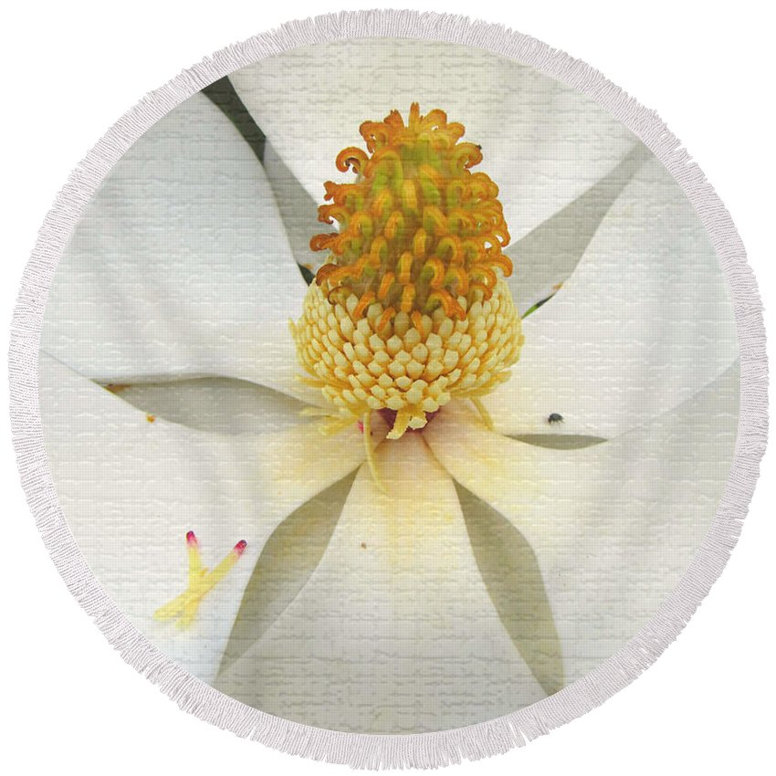 Magnolia Round Beach Towel featuring the photograph Magnolia Blossom by Karen Beasley