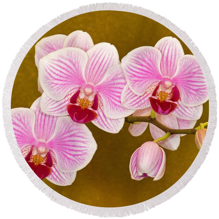 Plant Round Beach Towel featuring the photograph Moth Orchid by Millard H. Sharp