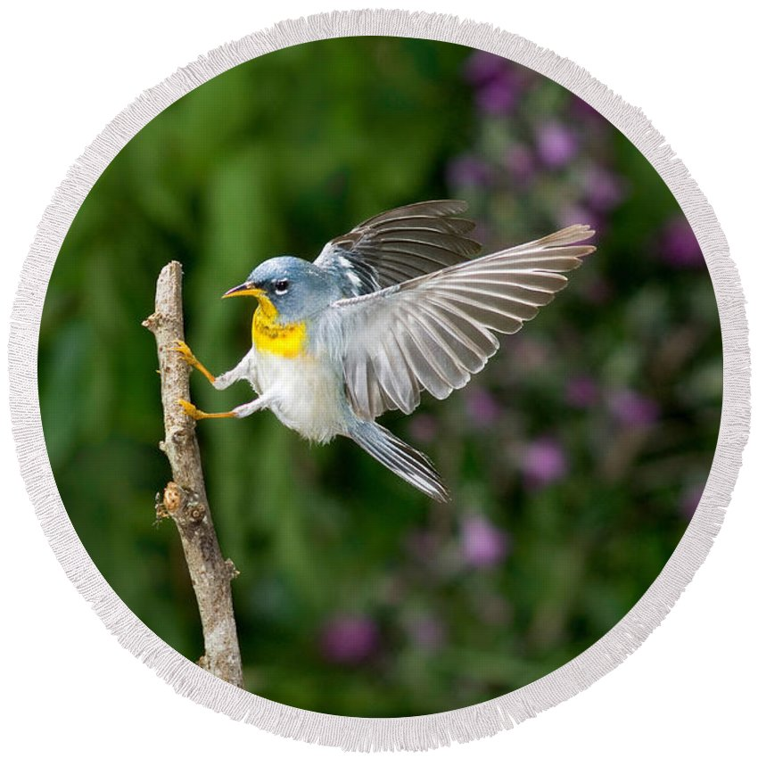 Northern Parula Round Beach Towel featuring the photograph Northern Parula Warbler by Anthony Mercieca