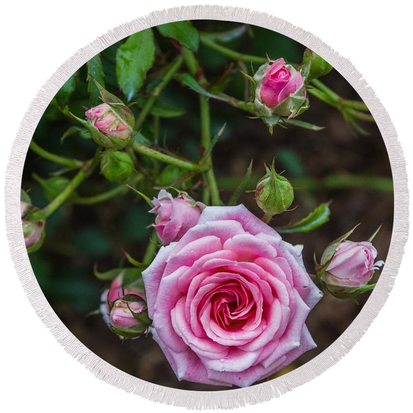 Florida Round Beach Towel featuring the photograph Pink Roses by Jane Luxton
