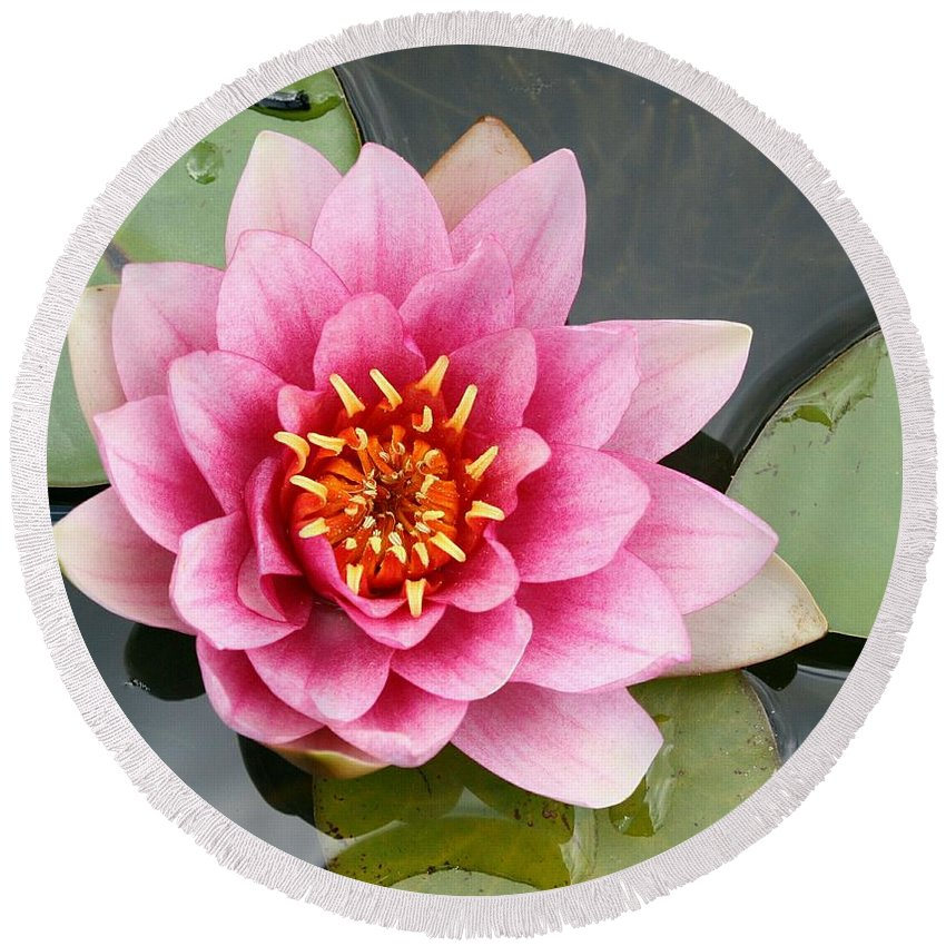 Lily Round Beach Towel featuring the photograph Pink Waterlily by Christiane Schulze Art And Photography