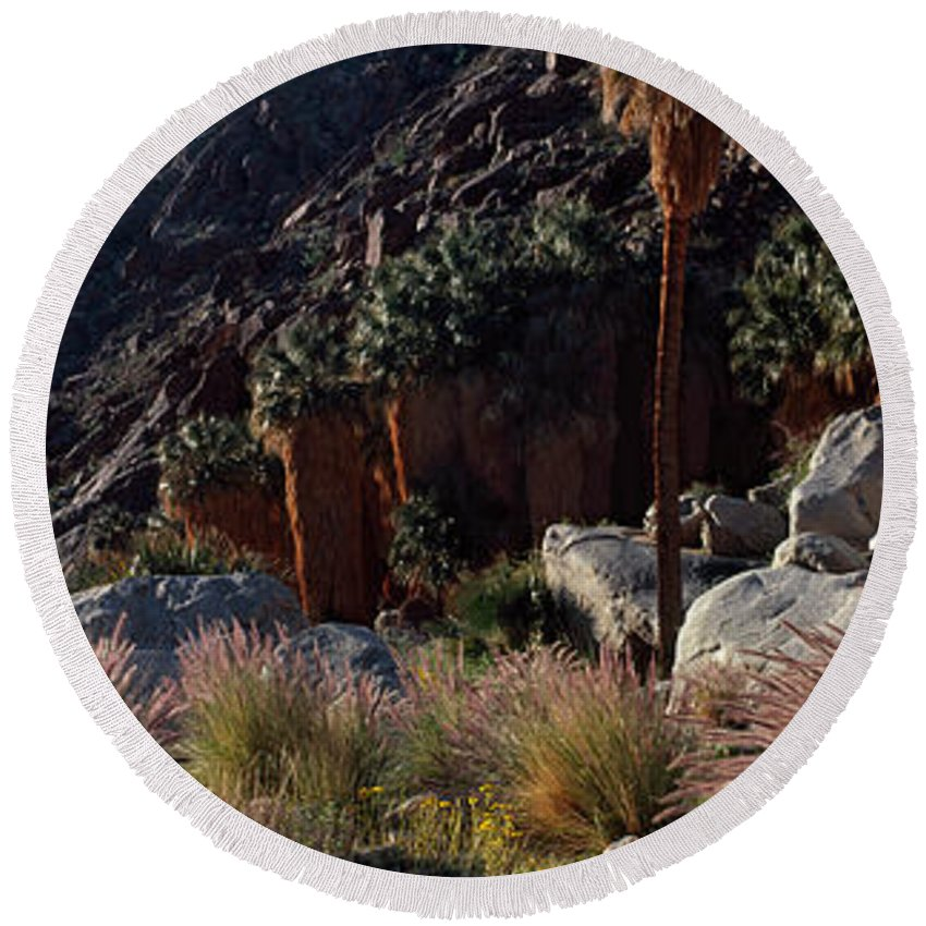 Photography Round Beach Towel featuring the photograph Plants On Landscape, Anza Borrego by Panoramic Images