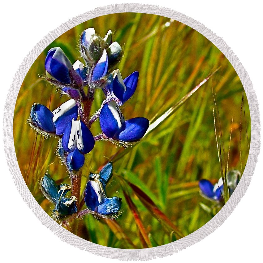 Pygmy-leaved Lupine In Antelope Valley Poppy Preserve Round Beach Towel featuring the photograph Pygmy-leaved Lupine In Antelope Valley Poppy Preserve-california by Ruth Hager
