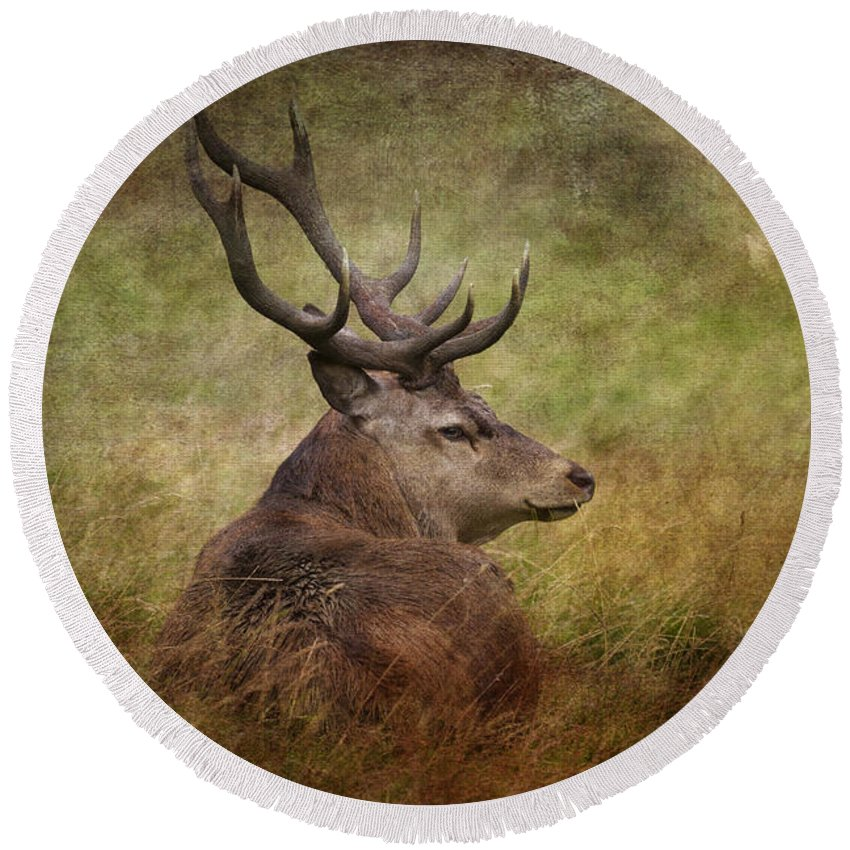 Red Deer Round Beach Towel featuring the photograph Red Deer Cervus Elaphus by Chris Smith