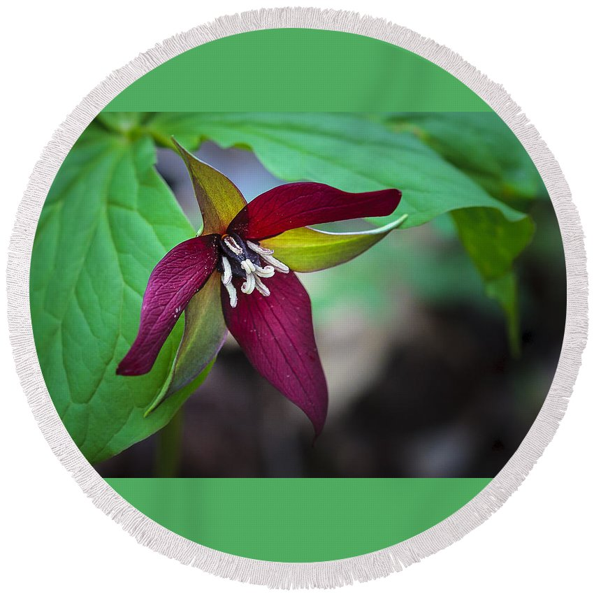 Beauty Round Beach Towel featuring the photograph Red Trillium by Jack R Perry