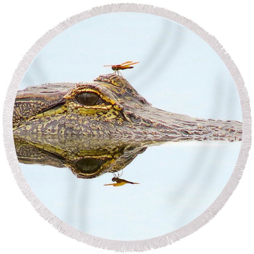 Gator Round Beach Towel featuring the photograph Reflection by To-Tam Gerwe