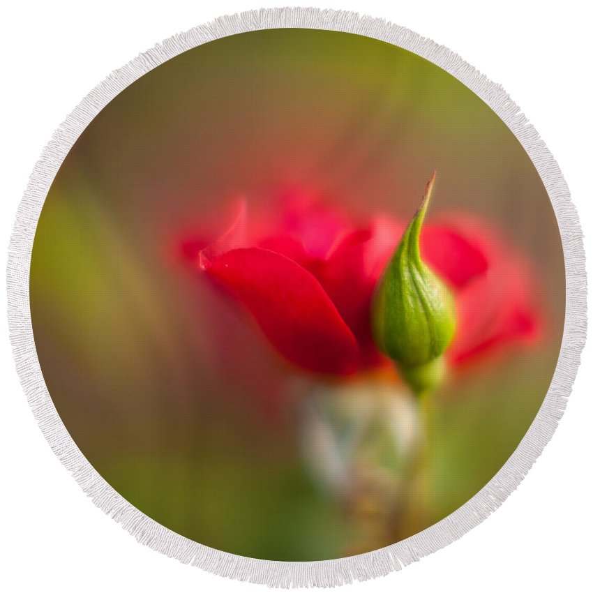 Flower Round Beach Towel featuring the photograph Rosebud by Mike Reid
