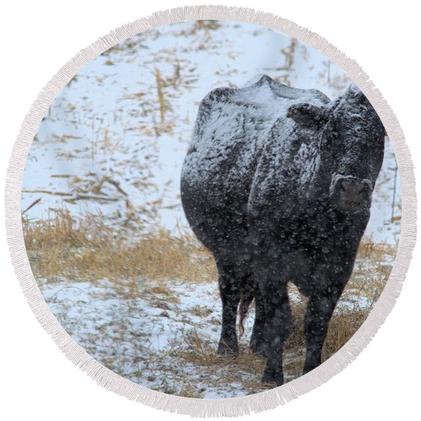 Angus Round Beach Towel featuring the photograph Snow Angus by Bonfire Photography
