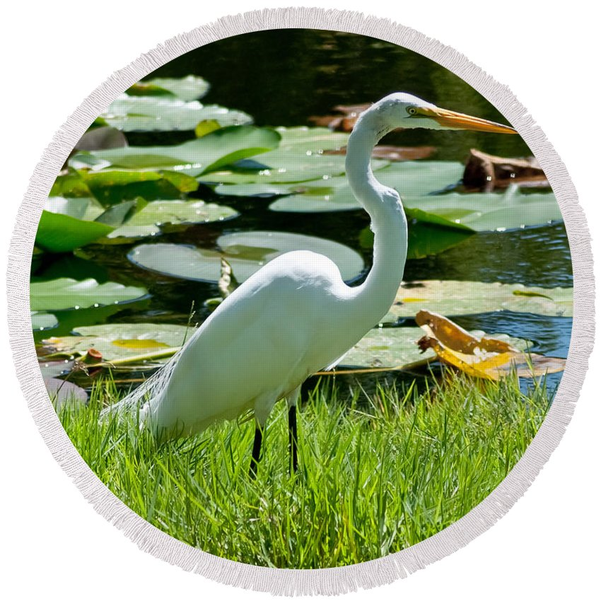 Snowy Egret Round Beach Towel featuring the photograph Snowy Egret by Stephen Whalen