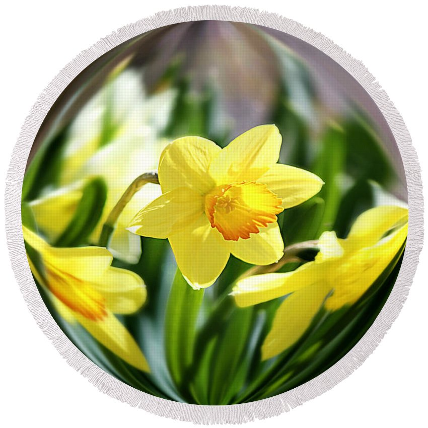 Daffodil Round Beach Towel featuring the photograph Spring Daffodils  by Tina LeCour