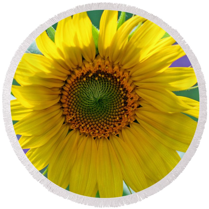 Sunflower Round Beach Towel featuring the photograph Sunflower by Karen Adams