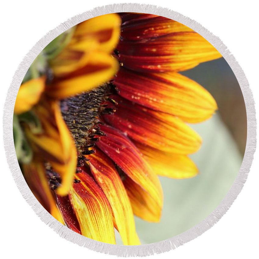 Mccombie Round Beach Towel featuring the photograph Sunflower Named The Joker by J McCombie