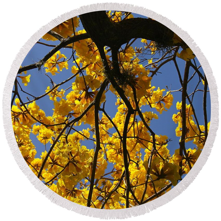 Tree Round Beach Towel featuring the photograph Tabebuia Tree Blossoms by Denise Mazzocco