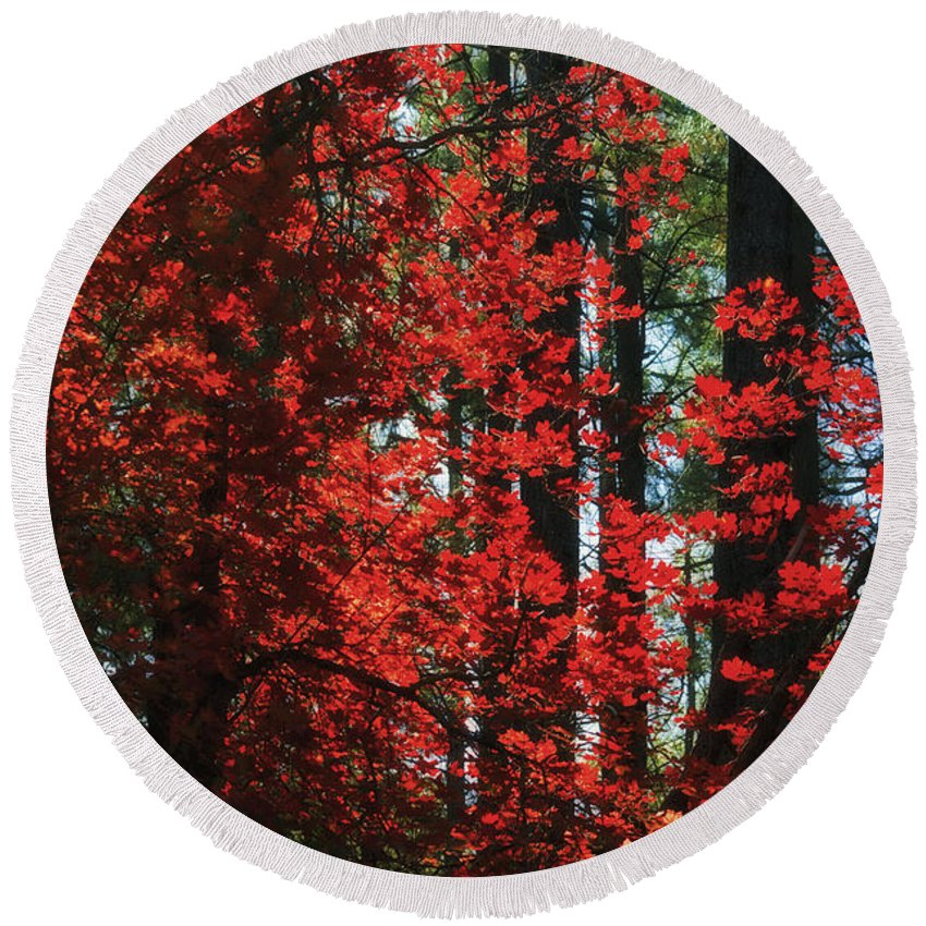 Red Tree Round Beach Towel featuring the photograph The Red Tree by Saija Lehtonen
