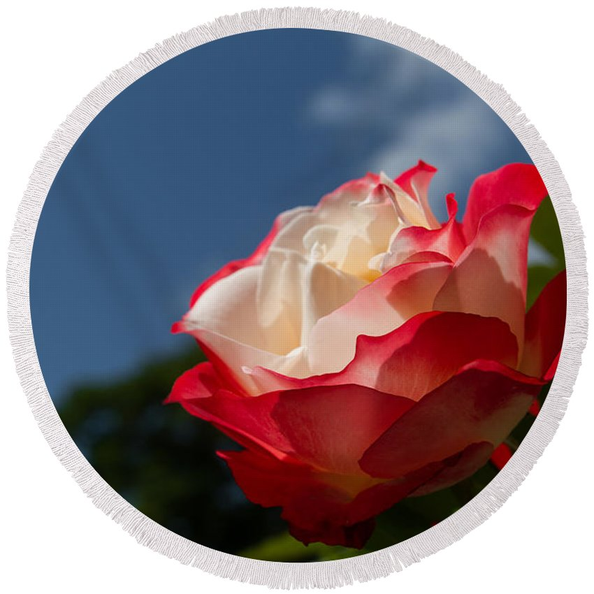 Rose Round Beach Towel featuring the photograph The Rose by Andreas Levi