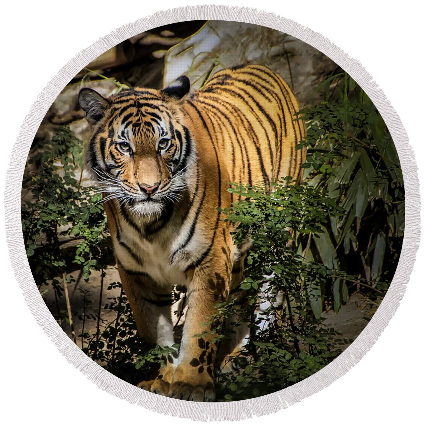 Tiger Round Beach Towel featuring the photograph Tiger by Jon Berghoff