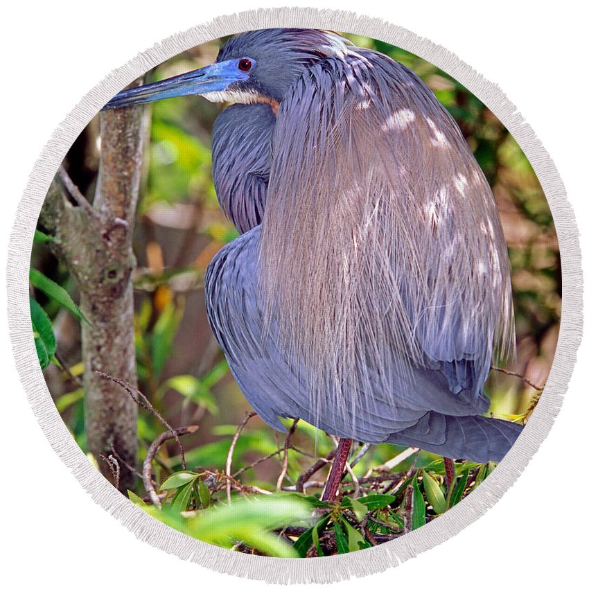 Animal Round Beach Towel featuring the photograph Tricolored Heron Egretta Tricolor by Millard H. Sharp