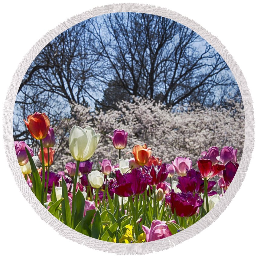 Tulips Round Beach Towel featuring the photograph Tulips At Dallas Arboretum V94 by Douglas Barnard