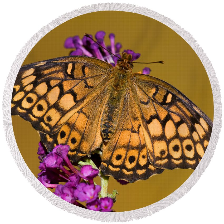Variegated Fritillary Butterfly Round Beach Towel featuring the photograph Variegated Fritillary by Millard H. Sharp