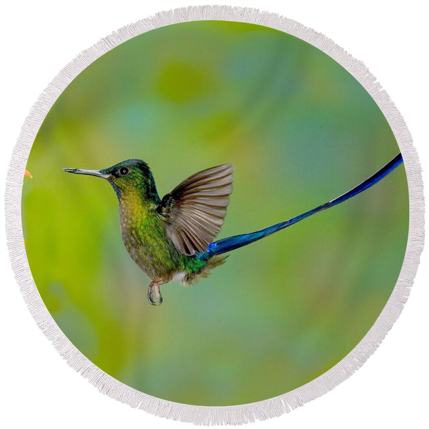 Fauna Round Beach Towel featuring the photograph Violet-tailed Sylph by Anthony Mercieca
