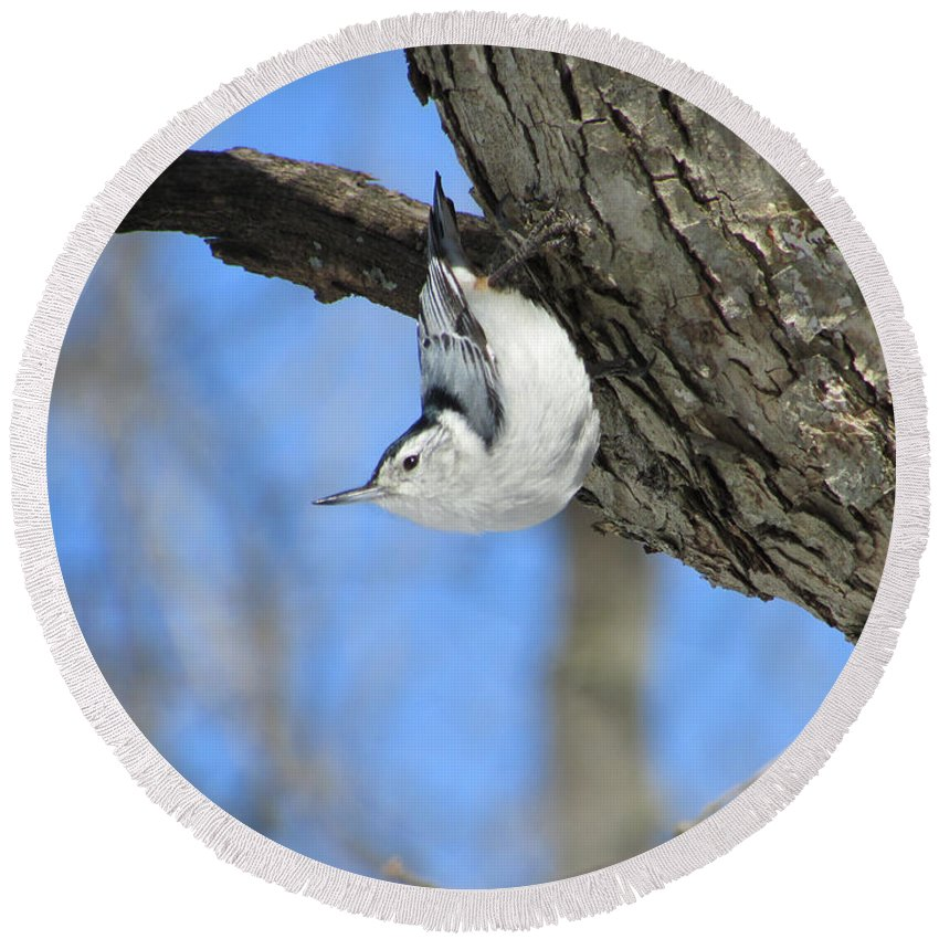 Bird Round Beach Towel featuring the photograph White-breasted Nuthatch by Jamie Smith