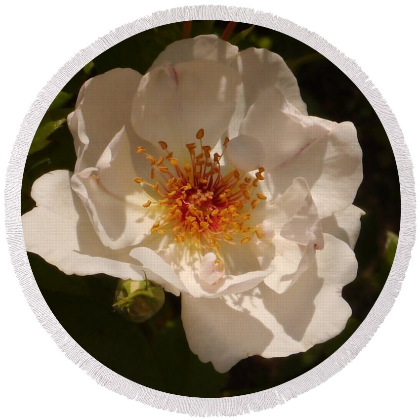 White Rose Round Beach Towel featuring the photograph White Rose by Christiane Schulze Art And Photography