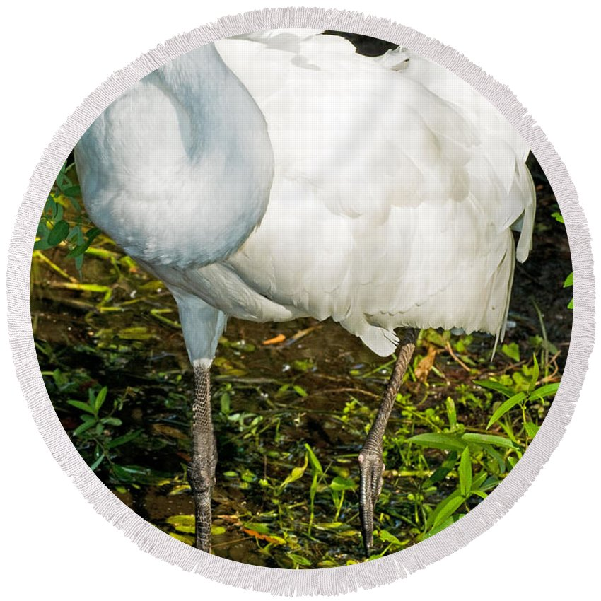 Nature Round Beach Towel featuring the photograph Whooping Crane by Millard H. Sharp