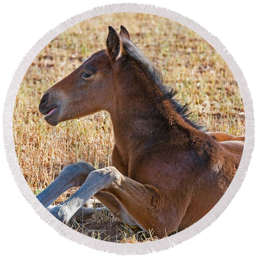 Nature Round Beach Towel featuring the photograph Wild Horse Foal by Millard H. Sharp