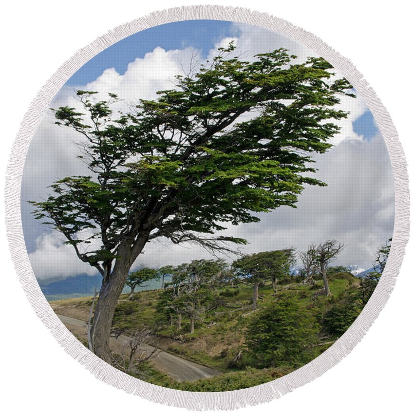 Sky Round Beach Towel featuring the photograph Wind-bent Tree In Tierra Del Fuego by Ralf Broskvar
