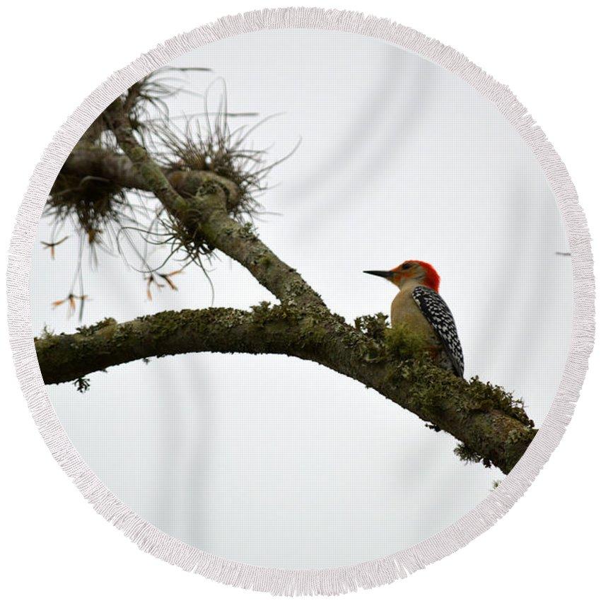 Woodpecker Round Beach Towel featuring the photograph Woodpecker by Linda Kerkau