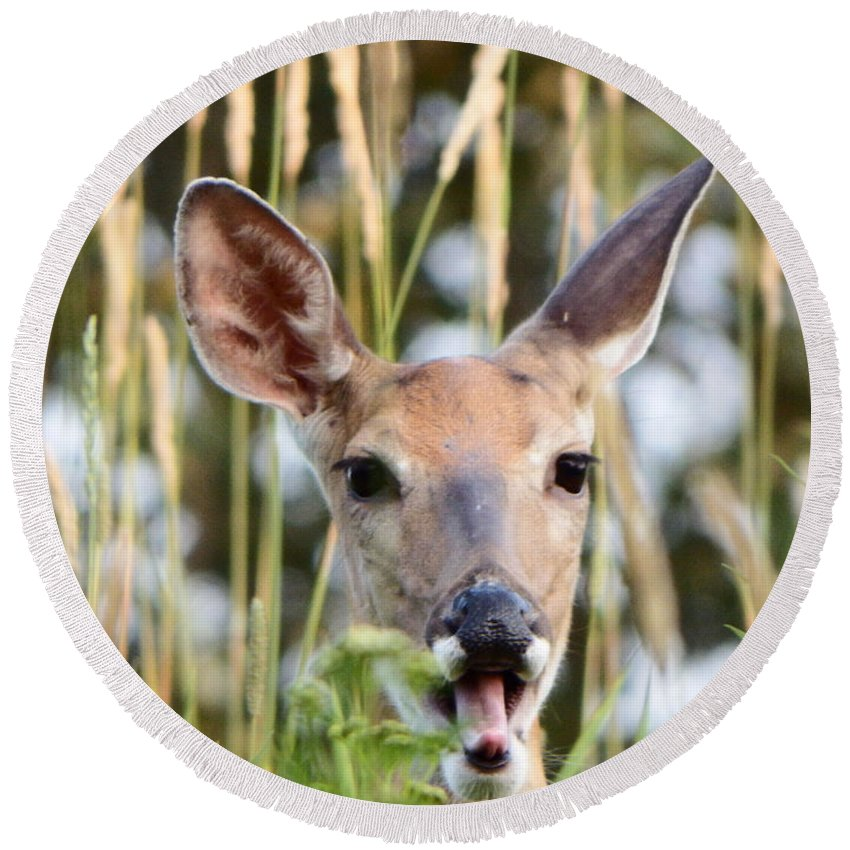 Deer Round Beach Towel featuring the photograph Yawn by Alison Gimpel