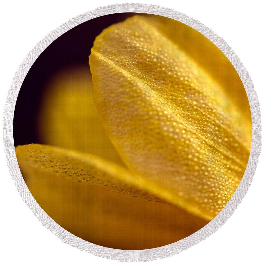 Yellow Daisy Round Beach Towel featuring the photograph Yellow Flower Macro by Iris Richardson