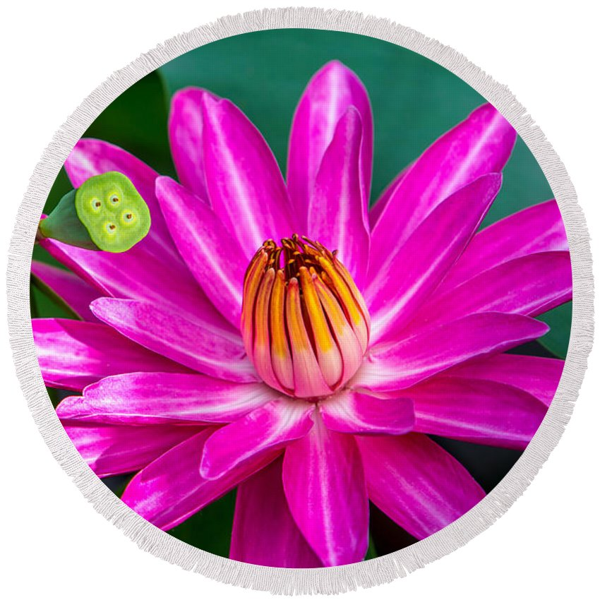 Flowers Round Beach Towel featuring the photograph Water Lily by Dennis Goodman