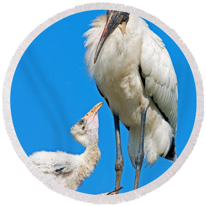 Nature Round Beach Towel featuring the photograph Wood Storks by Millard H. Sharp