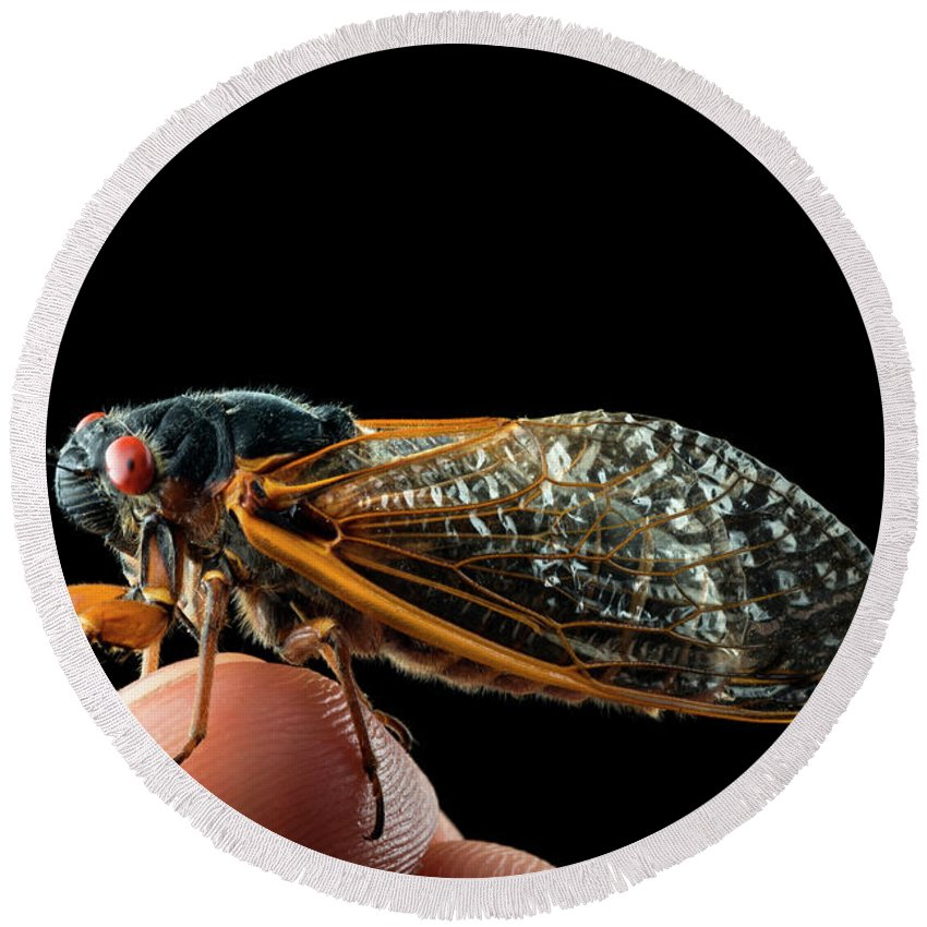 Backgrounds Round Beach Towel featuring the photograph A Detailed View Of A Brood II Cicada by Karsten Moran