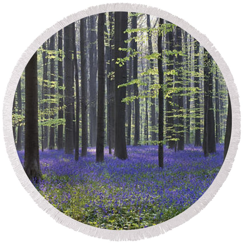 Bluebells Round Beach Towel featuring the photograph 110506p237 by Arterra Picture Library